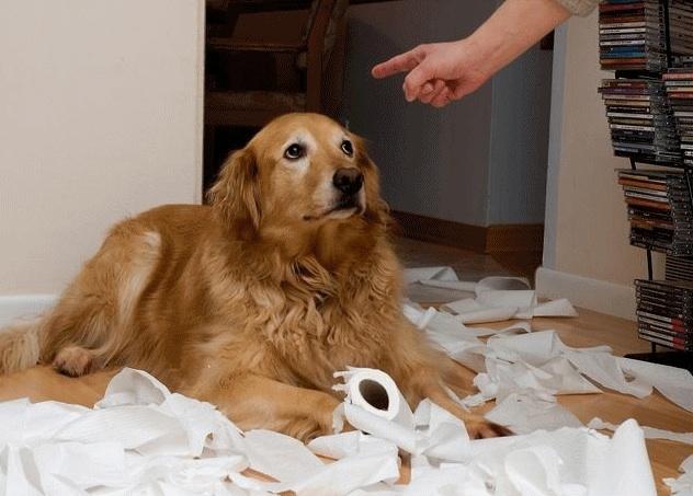ძაღლის დასჯა