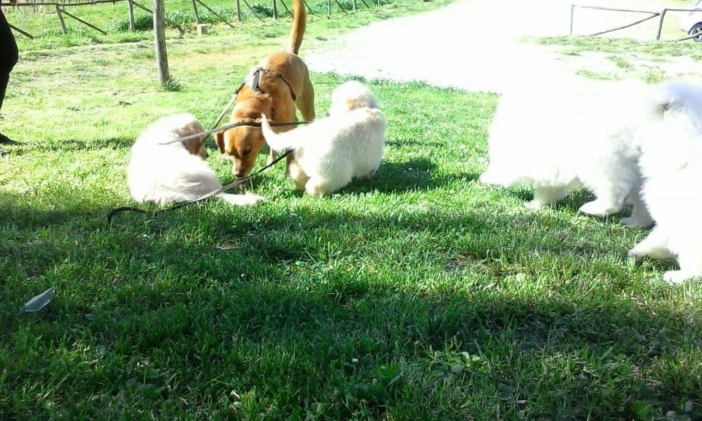 socializzazione cuccioli como varese