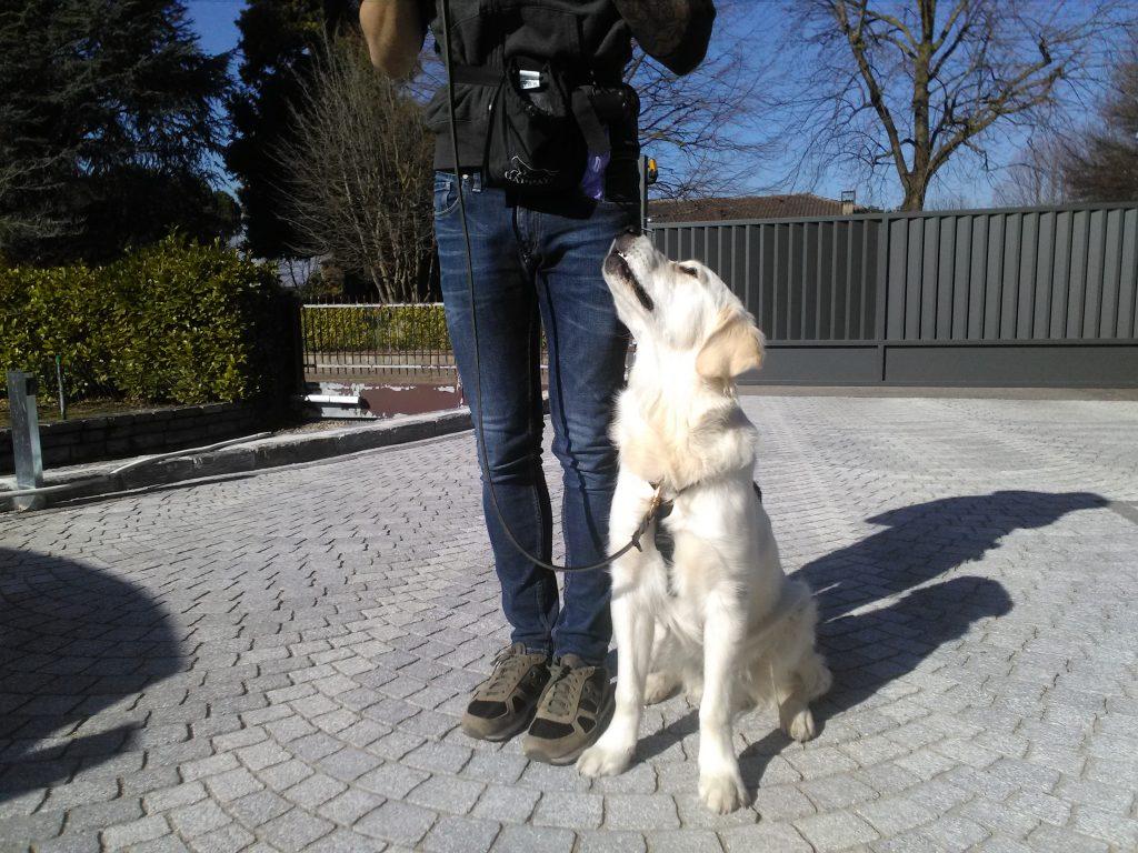 addestramento cane como varese