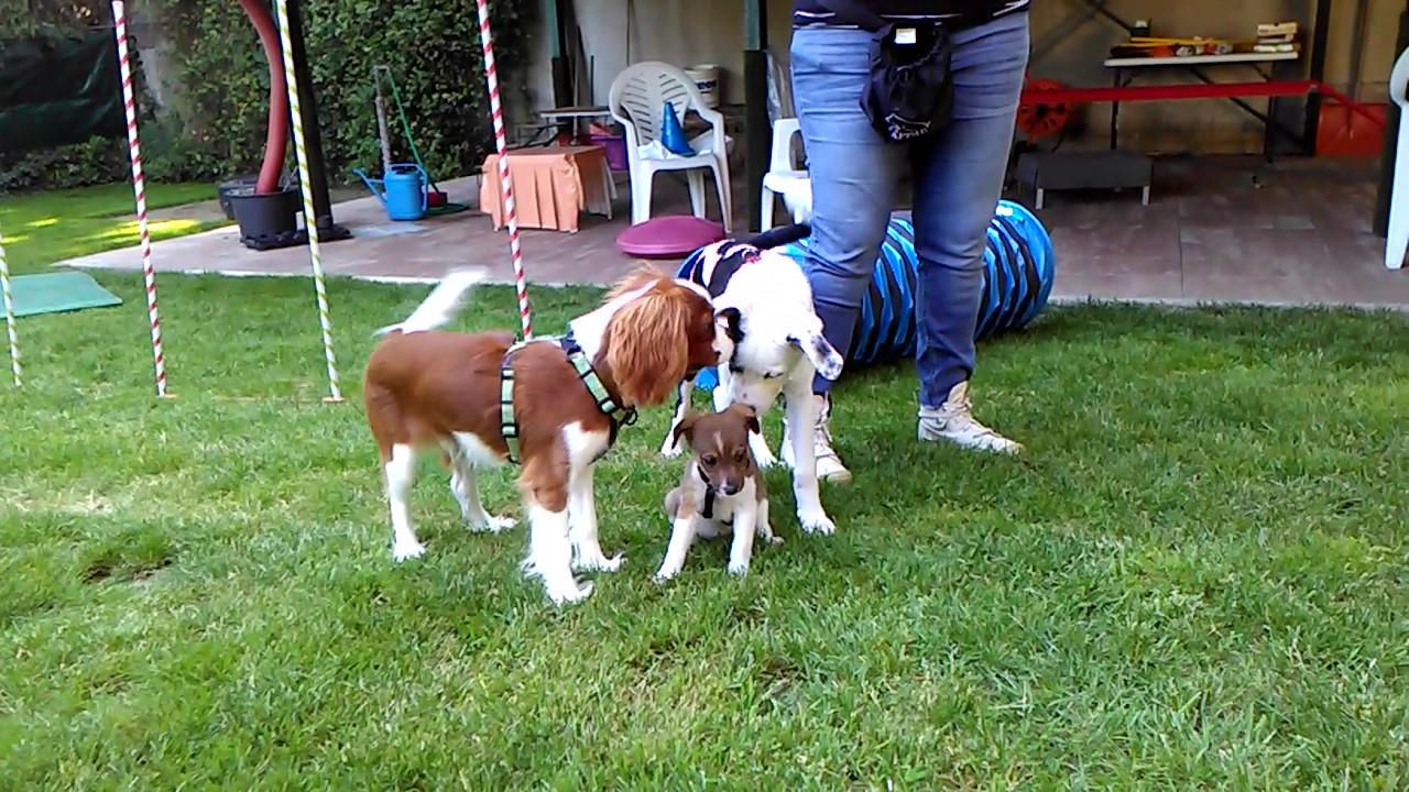 puppy class como, educazione cinofila varese, educatore cani como varese
