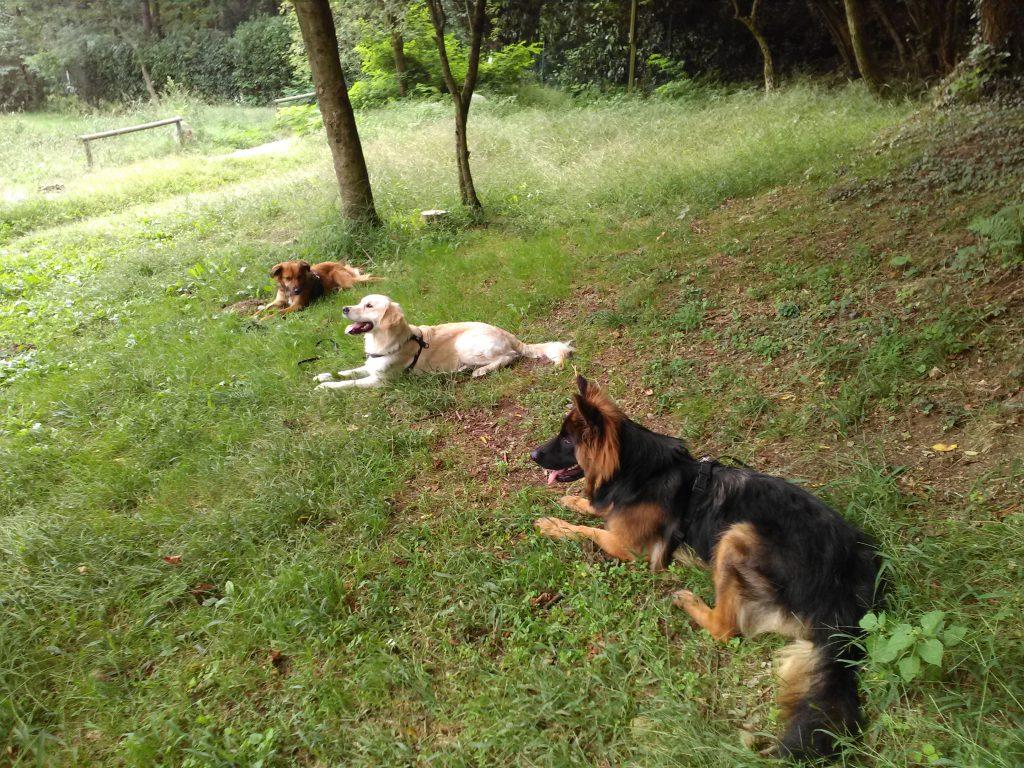 addestramento cani como, addestratore cani como, istruttore cinofilo como, scuola per cani como